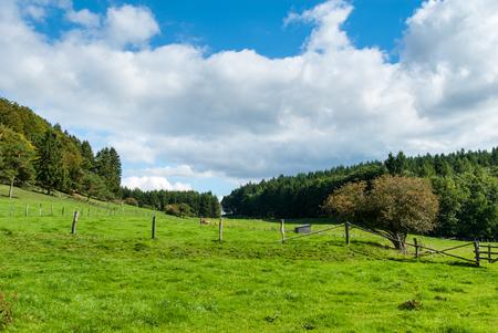 Meadows in der Hasenkammer zwischen Winterkopf und Weddelberg in der Nähe von Medebach im Hochsauer