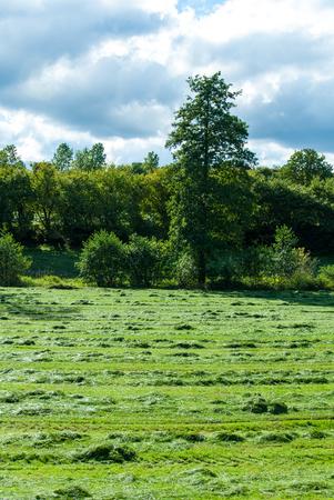 Frisch gemähtes Gras auf einer Wiese im Herbst