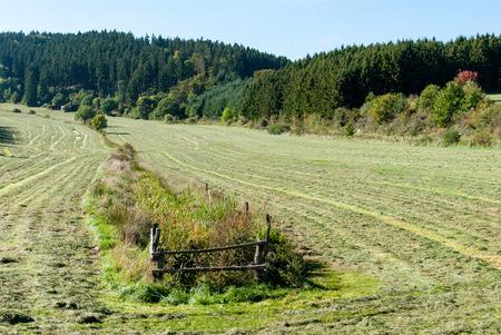 Wiese mit gemähtem Gras in einem Tal in der Nähe von Medebach, Hochsauerland, Deutschland