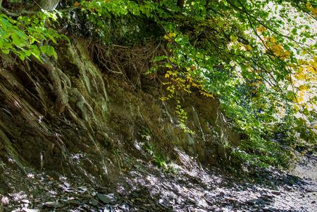 Baumwurzeln an einem gebrochenen Rand des Geländes im Steinbruch bei Bromberg, Medebach, Hochsauerland