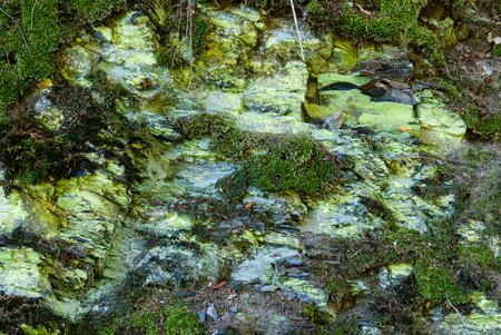 Felsen mit Moos und Flechten auf Borghagen in Ddinghausen, Kreis Medebach im Hochsauer