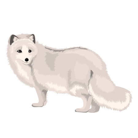 Vector Illustration Arctic Fox Vettoriali