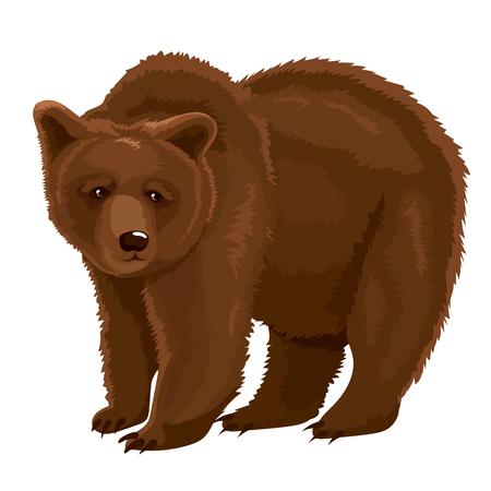 biting: A vector Illustration Brown Bear. Illustration
