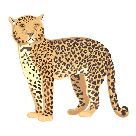 Vector Illustration Cheetah Standing