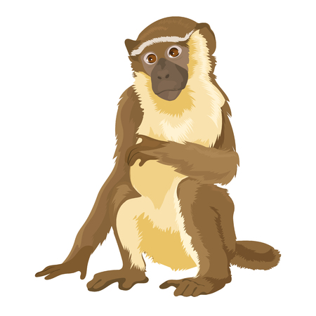 Vector Sitting Monkey Isolated