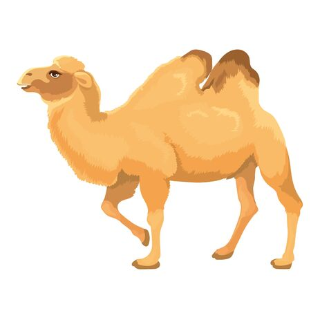 Vector Illustration Of Two Hump Camel Stands