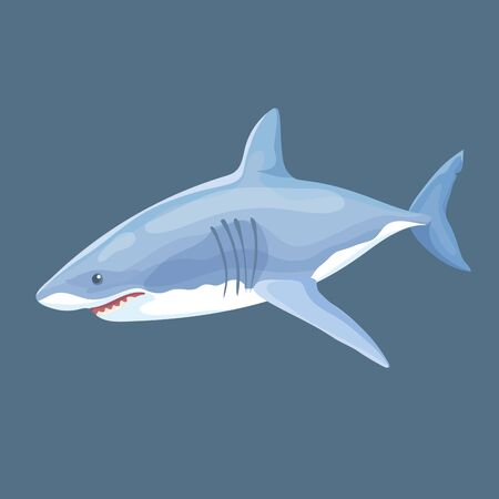 Vector Illustration Of Real Shark Swims Isolated Ilustração