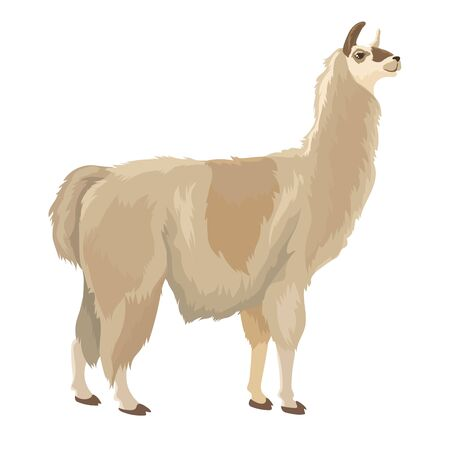 Vector Illustration Of Cute Lama Stand Isolated