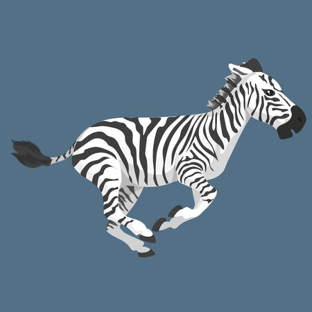 Vector Illustration Of Fright Zebra Run Isolated
