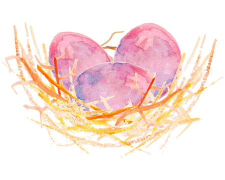 distinguished: Watercolor vector illustration eggs in a nest