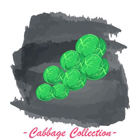 brassica: Organic fresh brussels cabbage vector illustration. Vegan vegetable raw food. Illustration