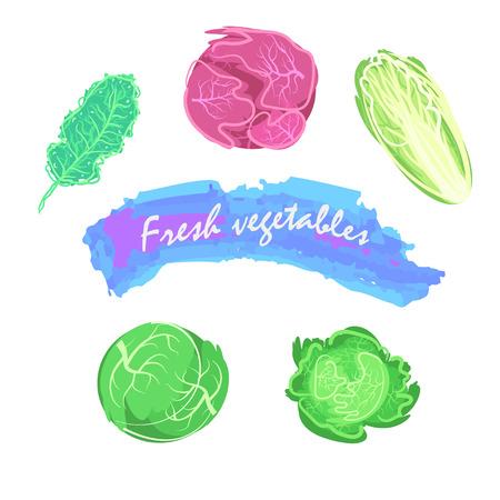 rindfleisch roh: Organische frische Kohl Vektor-Illustration. Vegan Rohkost.