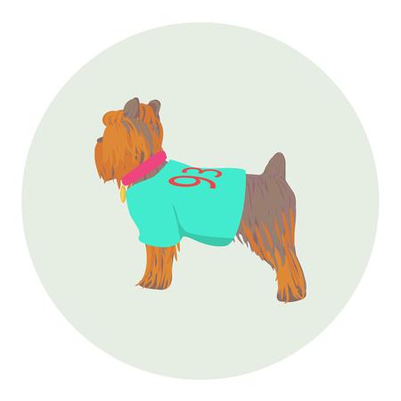 lap dog: Vector Yorkshire Terrier icona in piedi mezza faccia. Cane del fumetto in vestiti con il cane-collare Vettoriali