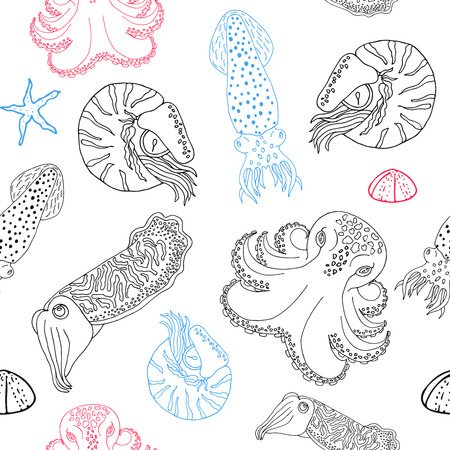 calmar: Hand drawn cephalopods seamless pattern. White background vector octopus, squid calmar, nautilus and cuttlefish. Sketch drawing