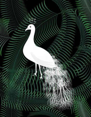 jungle animals: Blanco p�jaro del pavo real en la palma de la selva se va en el cartel de fondo oscuro.