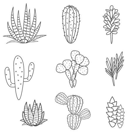 home garden: Succulents cacti plant vector set. Botanical black and white desert flora collection. Home garden cartoon cactuses. Illustration