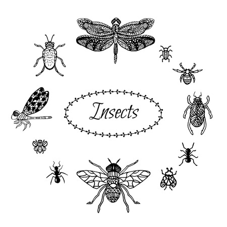 adder: Hand drawn insect set in  style. Black ink dragonfly, bugs, spider and butterflies. Isolated on white stylized hexapods for coloring pages and fabric prints. Sketched doodles.