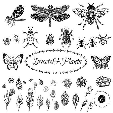 ant leaf: Hand drawn vector zentangle black plant leaves, flowers and insects set isolated on white. Ethnic ink openwork botanical objects, stylized for coloring pages in vintage boho style. Vectores