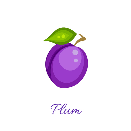 Purple plum isolated icon. Plum fruit on branch with leaf. Purple plum . Plum juice or jam branding  Ilustrace