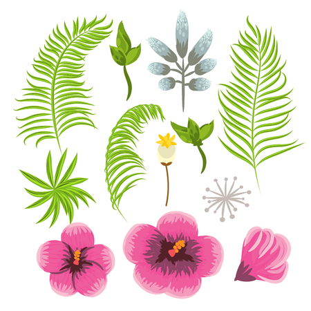 flora vector: Set of exotic tropical flowers and palm leaves. Jungle flora vector clip art.