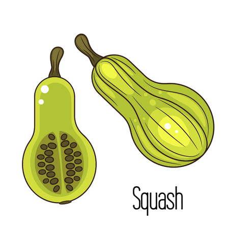 pumpkin seeds: Green squash or zucchini vector illustration. Cartoon pumpkin and slice with seeds. Illustration