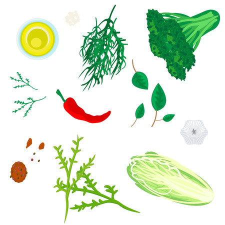 Greenery herbs and spices seasoning vector illustration. Cabbage, salad, dill, chilli and olive oil. Illustration