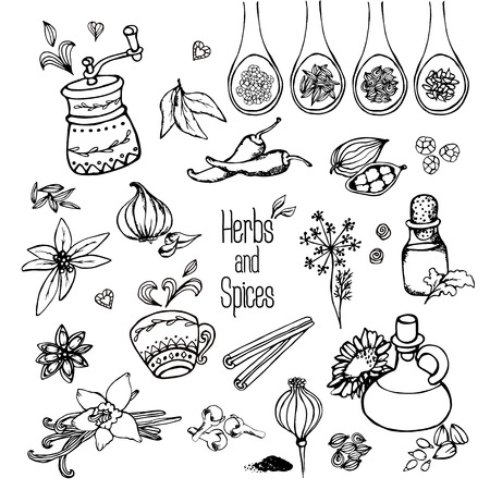 freehand drawing: herbs and spices, freehand drawing Illustration