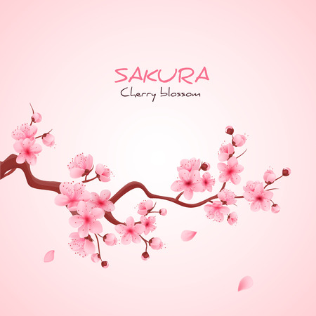 pink flower background: illustration sakura cherry, branch with blooming flowers, Japan flowers Illustration