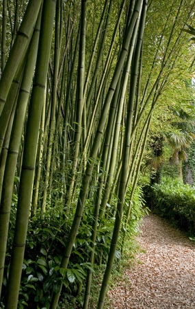 Path next to the Bamboo forest Stock Photo