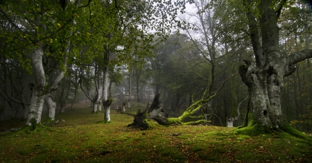 Misty Forest, north of Spain Stock Photo