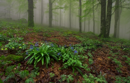 Spring in the forest in a foggy day Stock Photo
