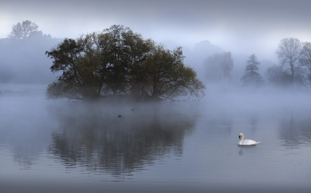 Mute swan swimming in lake during sunrise photo