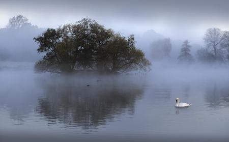 mute swan: Mute swan swimming in lake during sunrise Stock Photo