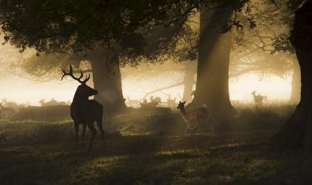 휴식을 취하는 휴경지 그룹을 찾는 남성 붉은 사슴