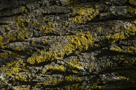 tree trunk with moss , texture, background Stock Photo - 24629412