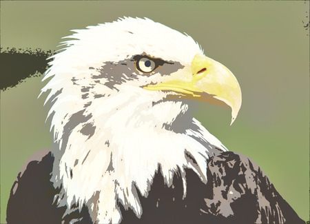 abductor: Majestic bald Eagle Portrait on green