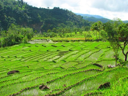 Rice terraces in Tegallalang, Bali, Indonesia Stock Photo - 4313517