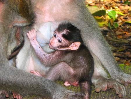 Sacred Monkey Forest in Ubud, Bali, Indonesia photo