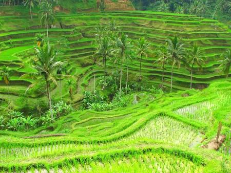 テガララン、バリ、インドネシアの棚田 写真素材
