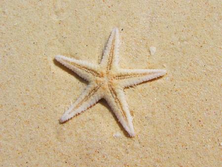 砂の上のヒトデ 写真素材
