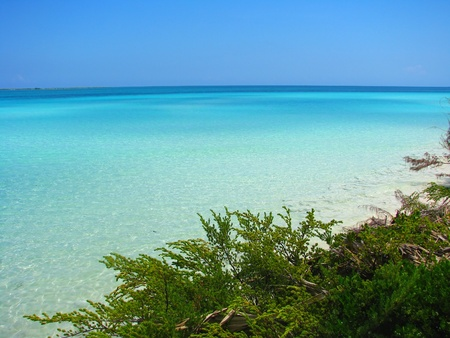sea grass: Clear water and sand dune covered with green plants, Cayo Guillermo, Cuba