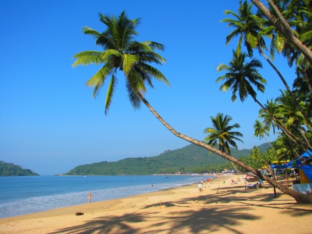 Curved palm on Palolem beach, Goa, India photo