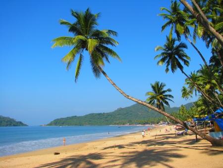 Curved palm on Palolem beach, Goa, India