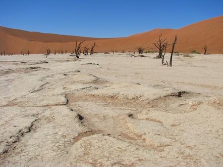arboles secos: Dom quemada tierra con �rboles muertos en Deadvlei (Death Valley), Sossusvlei, Namib-Naukluft Parque Nacional de Namibia Foto de archivo