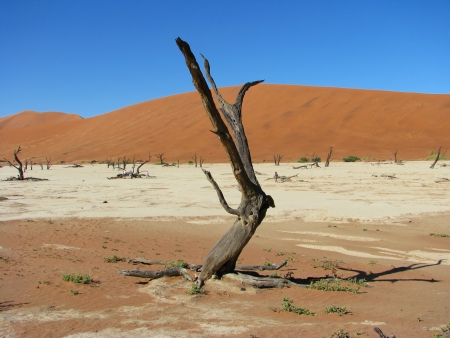 Dead trees and red dune in Deadvlei (Death valley), Sossusvlei, Namib-Naukluft National Park of Namibia photo