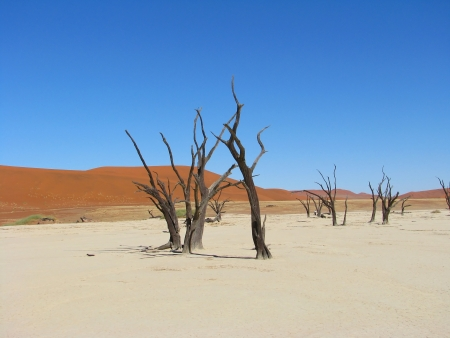 arboles secos: Los árboles muertos y las dunas de color rojo en el Deadvlei (Valle de la Muerte), Sossusvlei, Namib-Naukluft Parque Nacional de Namibia