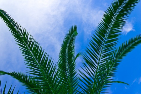 Tropical sheets against the blue sky Stock Photo