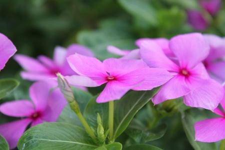 Fine flowers Stock Photo - 12958459