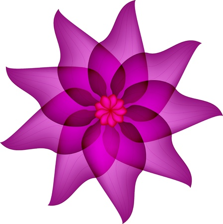 tonga: Violet flower