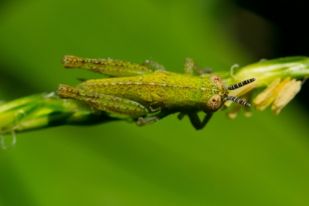 The small grasshopper sits on a branch and pads holds a branch part photo